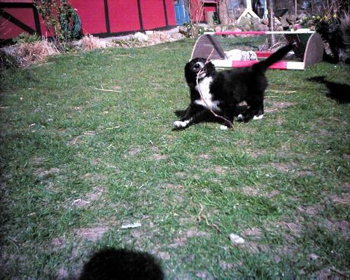 Du ser billeder fra kataloget: Billeder af Bugsy