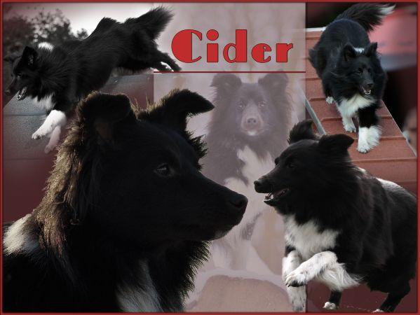 Du ser billeder fra kataloget: Billeder af Cider