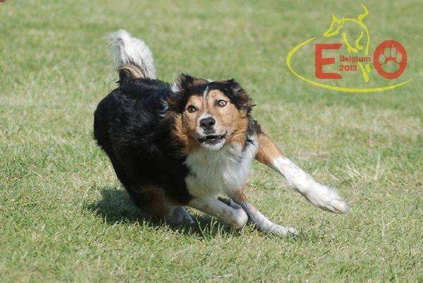 Du ser billeder fra kataloget: Billeder af Easys afkom