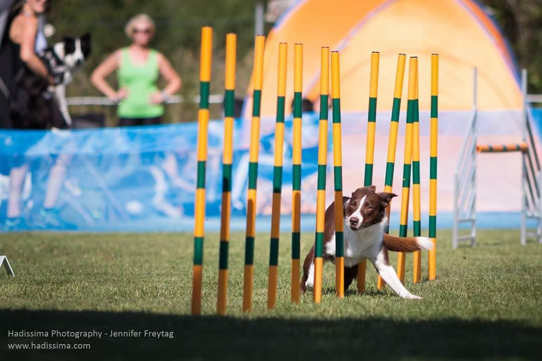 Du ser billeder fra kataloget: Billeder af Play og Jack