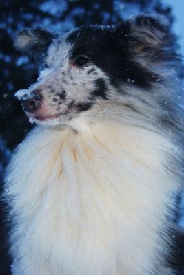 Du ser billeder fra kataloget: Billeder af Primadonna