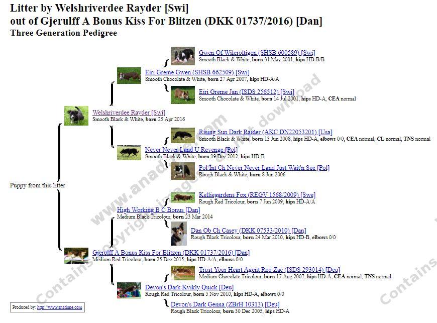 Du ser billeder fra kataloget: stamtavle / pedigree